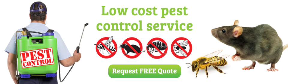 Low Cost Pest Control Service