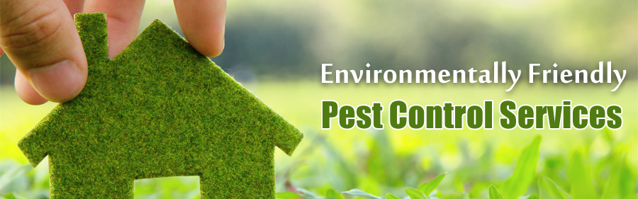 Pest Control India, Commercial, Residential Services in Mumbai